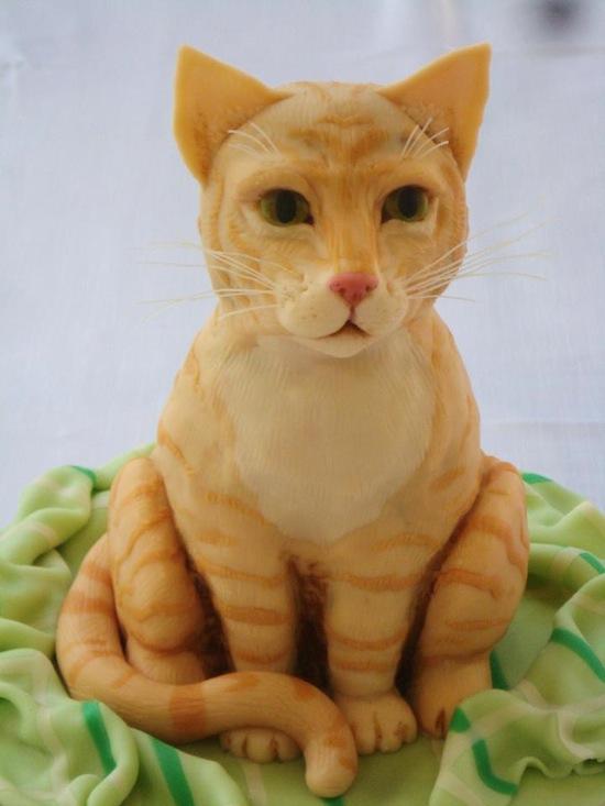torte gatti